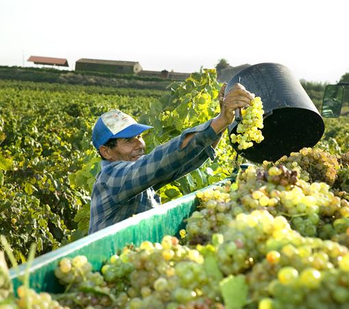 Degustace vín smajitelkou vinařství Mas Comtal