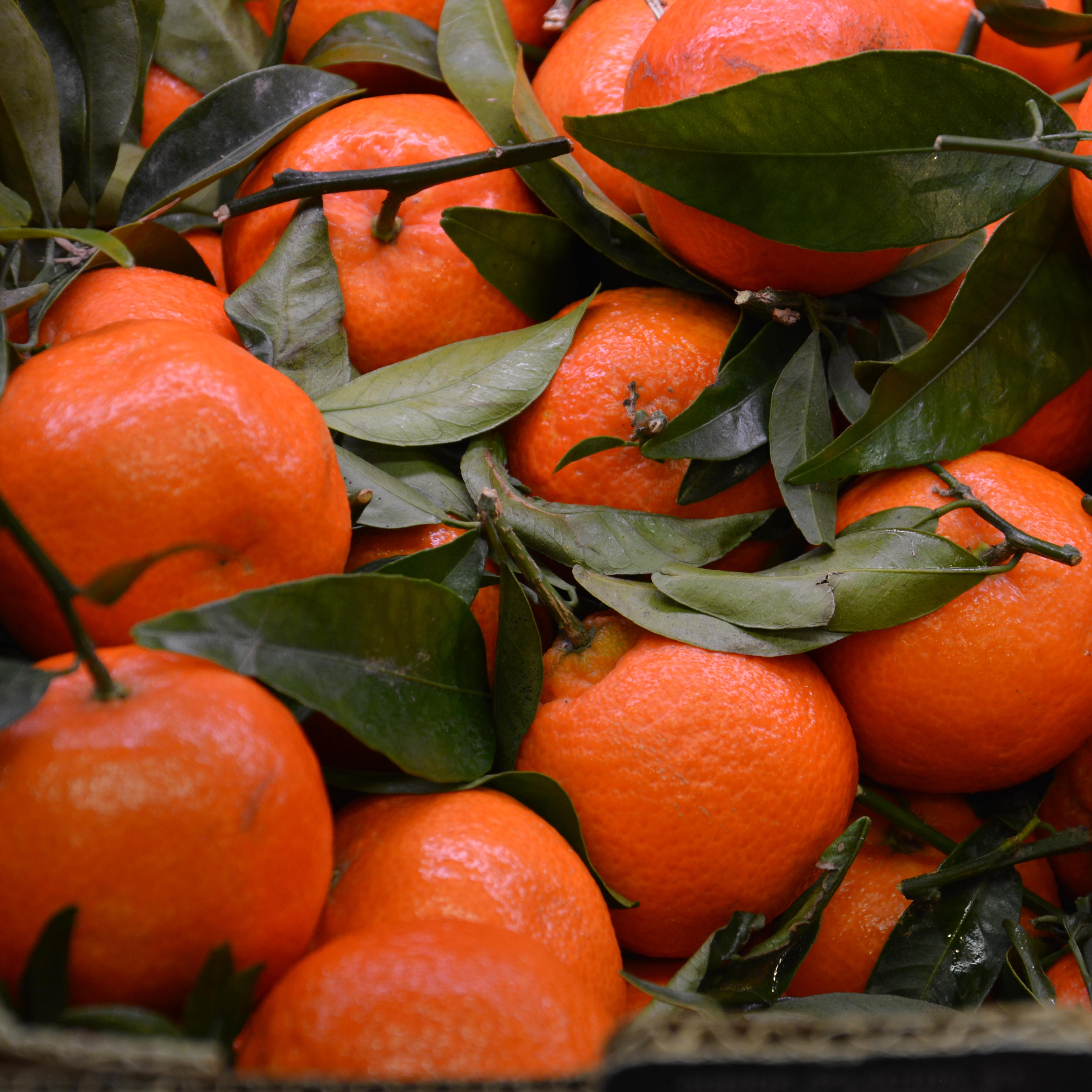 Ovoce azelenina vKredenci