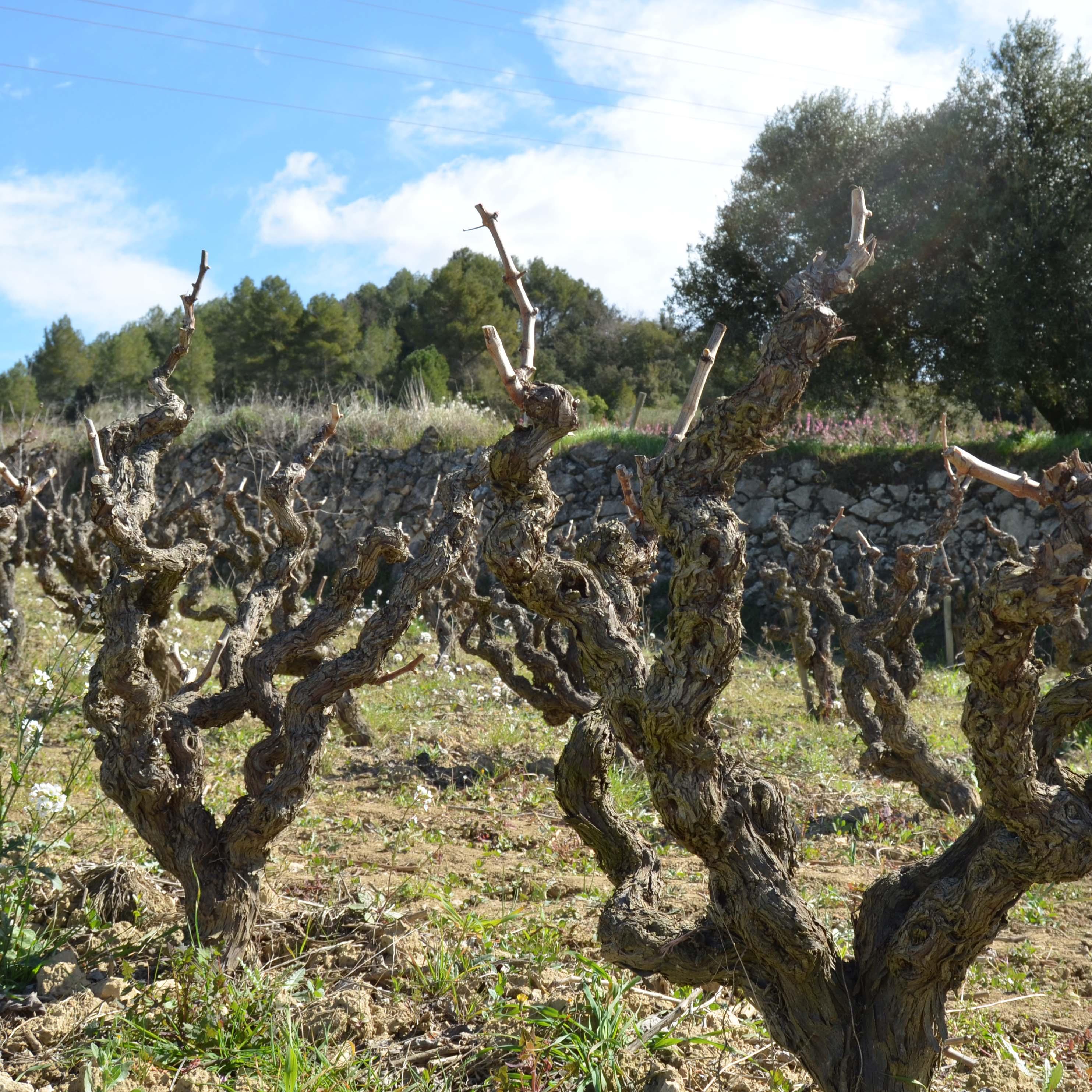 Ochutnávka svinařem: vinařství Mas Comtal, Palacio de Villachica aRotllan Torra