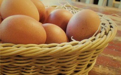 Čerstvá vajíčka ivbiokvalitě